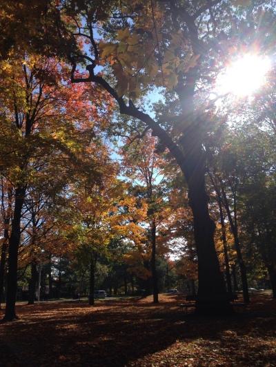 Autumn_Trees_High_Park